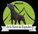 BRACOS ALEMANES DE LA SIERRA ESPADAN